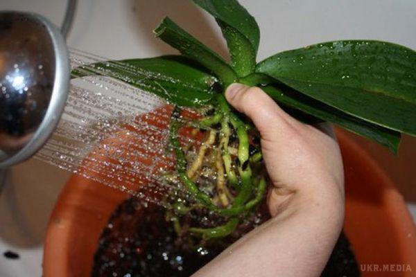 Как пересадить орхидеи в домашних условиях фото