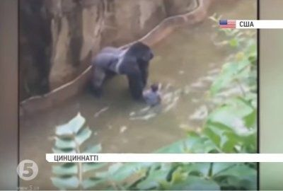 У США хлопчик впав у вольєр до горили