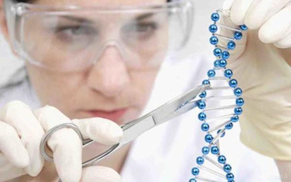 Вчені вперше виростили химеру людини і свині