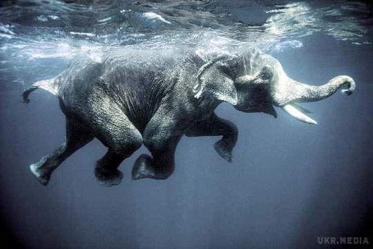 НаШрі-Ланці слона віднесло хвилею у відкритий океан. Рятували 12 годин
