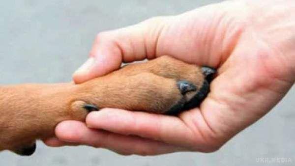 Президент Порошенко підписав закон, який посилює відповідальність зазнущання над тваринами
