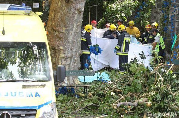 Унатовп паломників впало дерево: 12 загиблих
