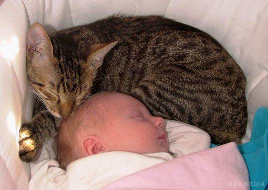 УХарківській області кішка задушила тримісячну дитину
