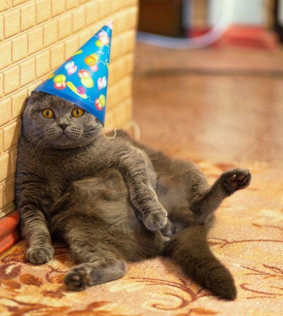 Открытки с днем рождения с котами британцами 94