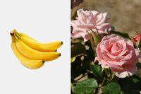 добрива,рослини,Дачний сезон,корисні поради