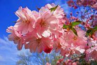 Прогноз погоди в Україні на 20 квітня: прохолодно. 20 квітня в Україні синоптики прогнозують прохолодну та вітряну погоду, місцями пройдуть дощі.