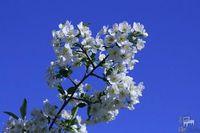 Народні прикмети на сьогодні 21 травня 2018 – День Івана Богослова