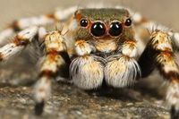 Чому забороняється вбивати павуків в будинку!