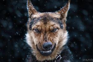 Страшна загибель учасника АТО під Києвом: нові подробиці. У селі під Києвом, де вівчарки загризли бійця АТО, назріває народний бунт.