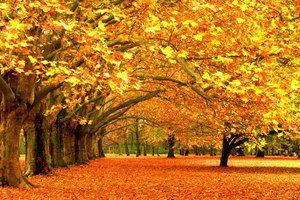 Прогноз погоди в Україні на сьогодні 2 жовтня:тепло, без опадів. В Україні 2 жовтня очікується тепла погода, без істотних опадів.