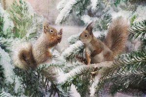 Якою буде зима в Україні в цьому році. Метеоролог спрогнозувала, якою буде зима в Україні.