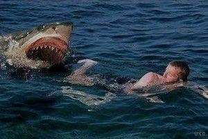 Акула вбила американську туристку в Тихому океані. Інцидент стався біля берегів острова Кокос.