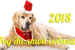 Три головні якості жовтої земляної Собаки. Зустрічаємо 2018 рік. рік жовтої земляної Собаки.