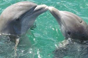 """В одеському дельфінарії під час шоу народилося дельфінятко (відео). В одеському дельфінарії """"Немо"""" народилося маленьке дельфінятко прямо під час шоу."""