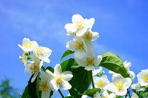 Народні прикмети на 21 червня – День Федора Літнього. Відомо, що в давнину саме в цей день намагалися копати колодязі.